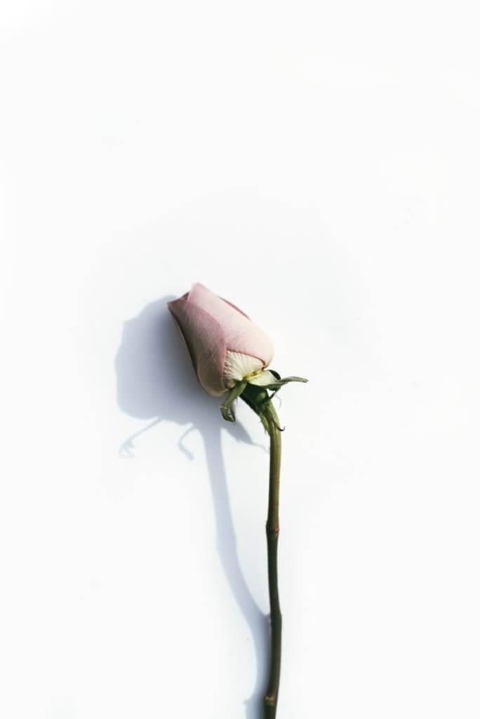 恋愛-好き-嫌い-脈あり-脈ナシ